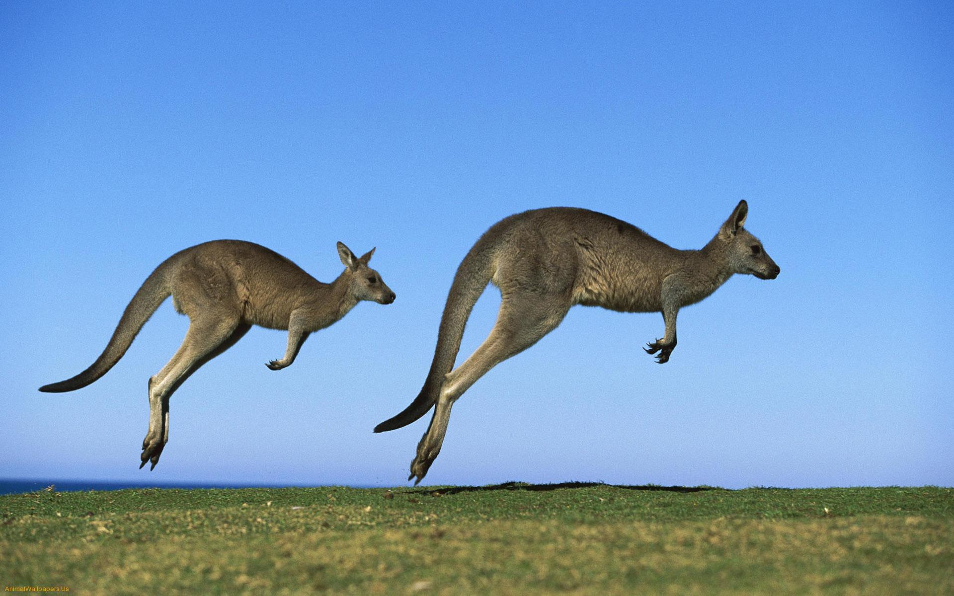 澳洲毕业签(485签证)指南