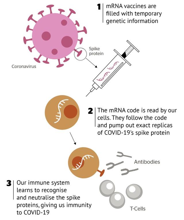 厉害了!墨大最新疫苗研究获联邦认可资助,将可快速制造且易保存。UNSW等团队也有新研究,澳洲共斥资千万澳币支持。